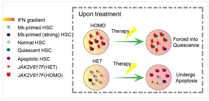 我国学者首次证明造血干细胞异质性与血液肿瘤的相关性