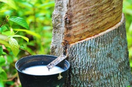 天然橡胶成本倒挂一杯橡胶水售价不如矿泉水 胶农之痛何解?