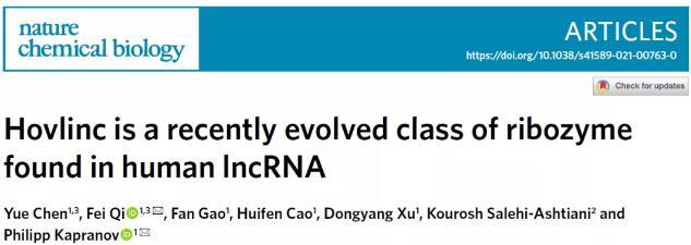 高通量检测很有效!华侨大学首次在lncRNA中发现新型自切型核酶