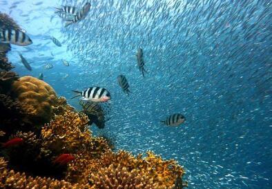 机器鱼自动调节气压来改变游泳速度对抗水流