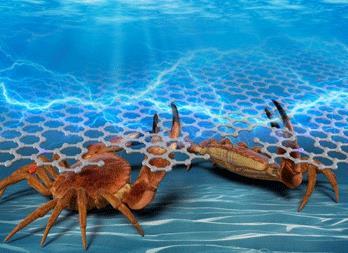 螃蟹壳衍生的纳米碳材料来了 可用于实现可持续的电子产品