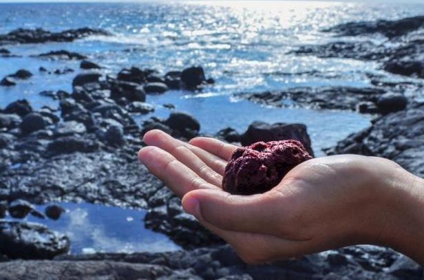 科学家创造了一种海草 可以减少动物甲烷排放量减少温室效应