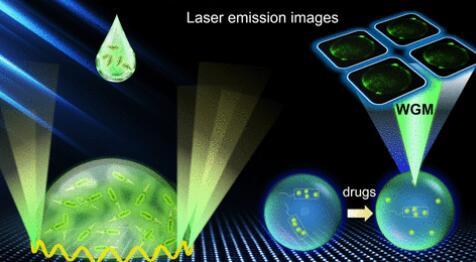 科学家采用微纳米激光技术,监测细菌与抗生素之间的相互作用