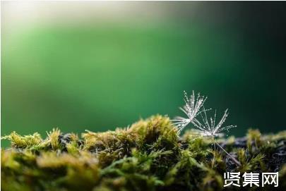 """中国西南野生生物种质资源库——我国野生生物的""""诺亚方舟"""""""