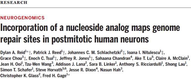"""衰老新发现!美国揭示神经元会将有限的修复机制用在""""刀刃""""上"""