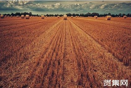最新版本《粮食流通管理条例》全文解读