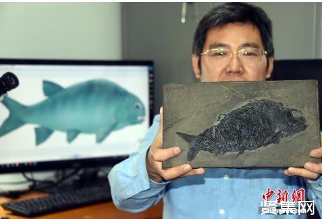 """中国科学家研究新发现2.44亿年前""""盘州暴鱼""""——疣齿鱼科迄今最古老的化石新证据"""