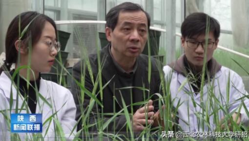 """储存了4万多个大麦遗传信息!我国研发出全球首款""""大麦芯片"""""""