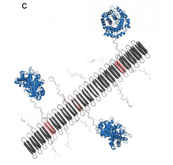 工程师开发自组装纳米纤维 可防止炎症造成的损害