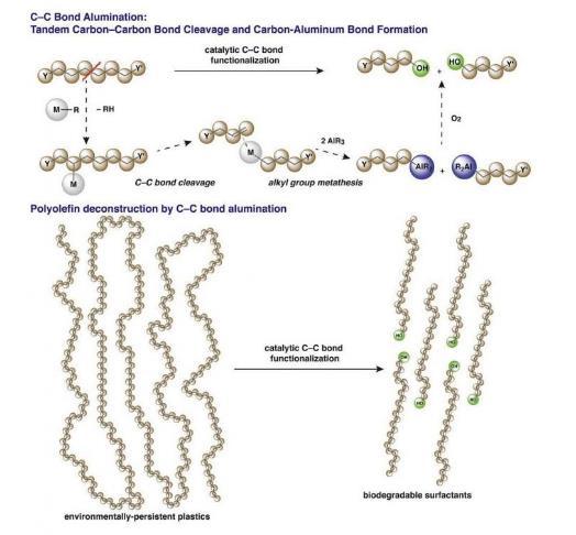 科学家发现新的化学工艺 可提供可生物降解的、有价值的化学物质