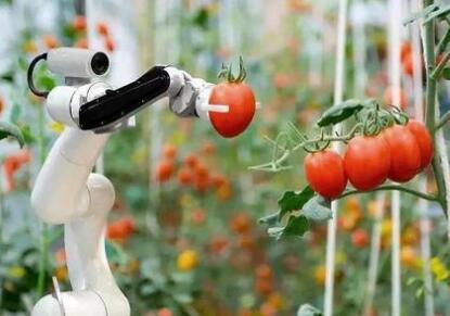 自动采摘苹果机器人,摘一个苹果只要九秒钟,成功率达到85%