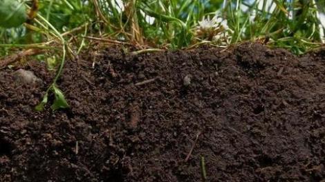 噬菌体可抑制土壤有机碳矿化 改善土壤质量