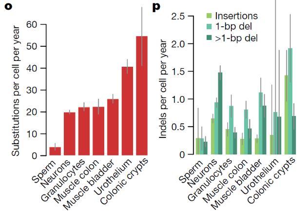 英国学者将基因测序带到前所未有的精度,开发了一种新方法NanoSeq