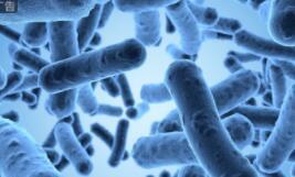 """华东医药提出工业微生物战略,将进一步加强""""互联网+""""的布局"""