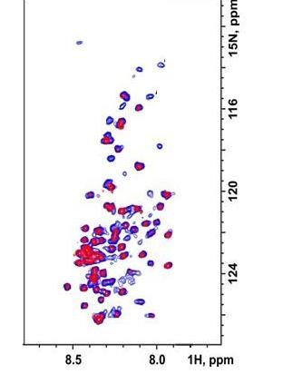 科学家找到一种检测淀粉样蛋白原纤维光谱信号的方法