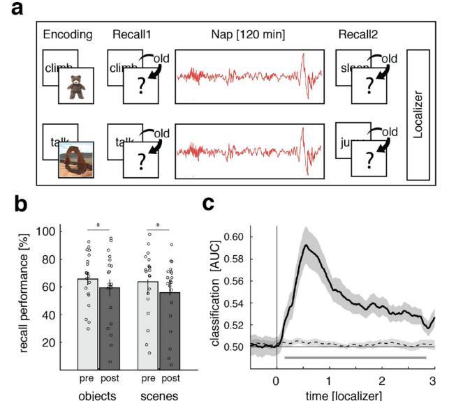 巩固记忆的新机制被揭示!慢波振荡和睡眠纺锤波的相互作用很重要