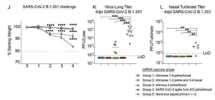 《科學》:預防多種冠狀病毒的新混合mRNA疫苗要來了