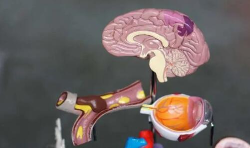 烏普薩拉大學發現腫瘤附近存在類似淋巴結的結構可對抗腦癌