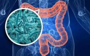 16000个基因组数据!明尼苏达大学发现肠道微生物组可遗传
