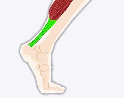 用于肌腱、韧带重建的可吸收支架,可在组织再生时被身体逐渐吸收