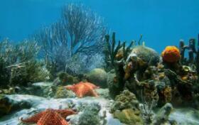 研究人员使用仪器收集浮游植物,揭示了海洋营养物质的基础