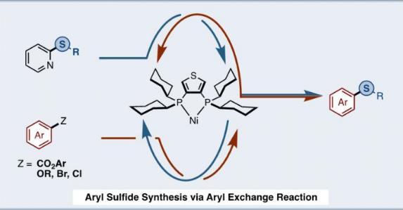 更加安全!研究人员使用镍催化剂从两种芳香化合物合成芳香酯