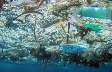 """将塑料转化为""""可食用蛋白质""""?地球上的塑料垃圾都能被""""吃掉""""了"""