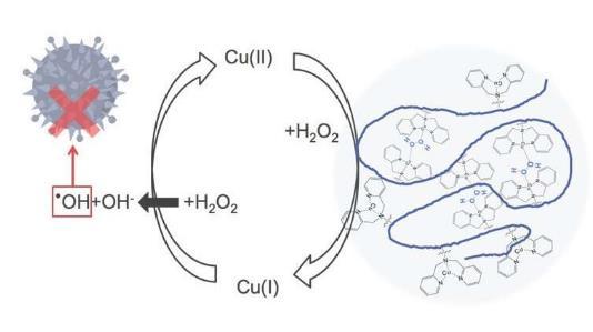 药物设计新策略:含铜聚合物成功提高过氧化氢活性
