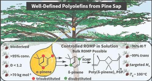 松树液基塑料:有可能成为新的可持续材料的游戏规则改变者