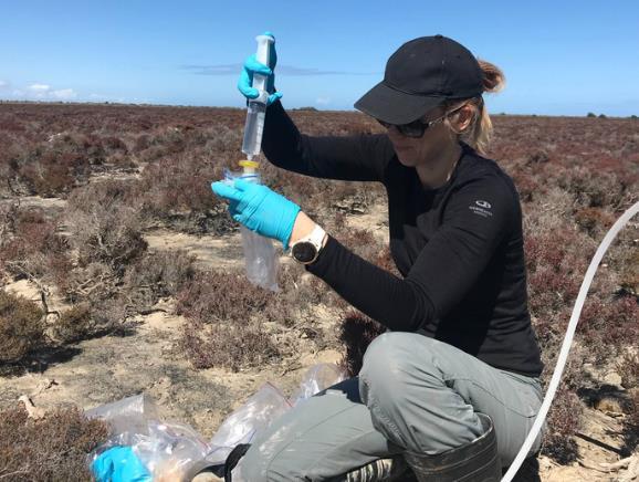 廉价且快速的硫同位素分析方法 为新环境应用开辟了潜力