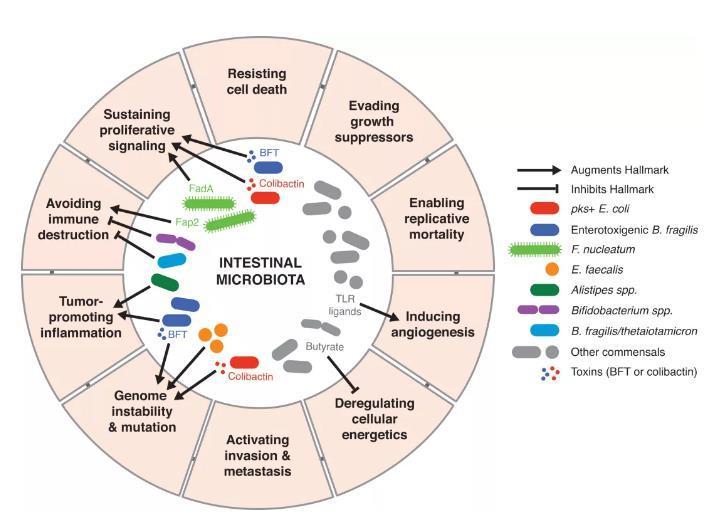从癌症的特征出发,深度解读微生物是如何促进癌症发生的