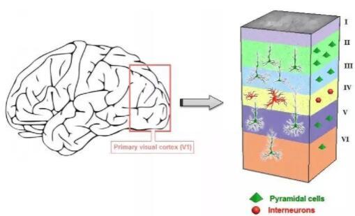 """深度学习和类脑计算都缺不了""""芯片"""",现有哪些出色的类脑芯片?"""