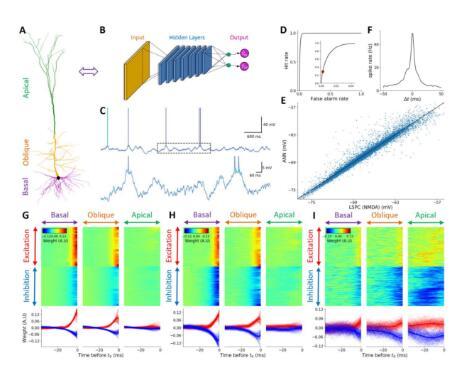 《【奇亿主管】上万个微分方程精确模拟神经元交互方式,让更高智商的AI成为可能》