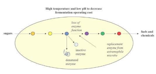 《【奇亿娱乐怎么代理】研究人员设计更强壮的微生物以改善燃料和化学品的生物生产》