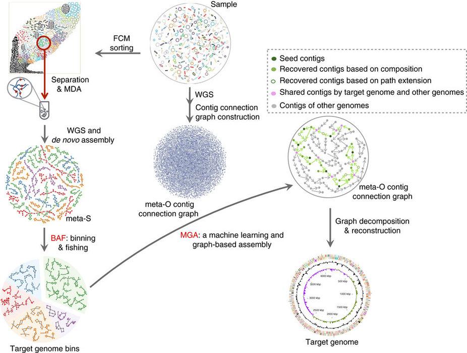 基于降低物种复杂度策略的微生物组结构解析的新技术——metaSort