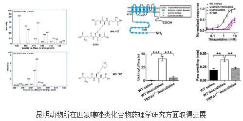 四氢噻唑的体内分子靶点:谷胱甘肽和TRPA1