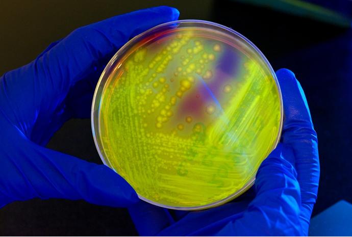 CRISPR或将替代传统抗生素,解决抗药性问题