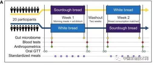 全麦面包的营养价值比白面包更高?