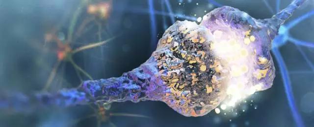 碳纳米管修复神经元 可恢复脊髓受损的人的神经功能!