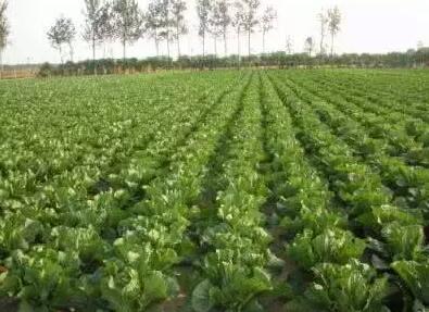 沂水县采购1385吨有机肥免费发给贫困户
