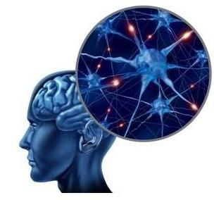 肥胖症研究:一个控制脂肪燃烧的大脑开关