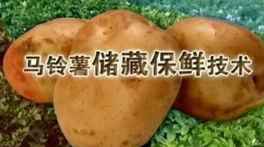 马铃薯贮藏保鲜技术:贮藏管理方法