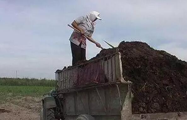 哪种有机肥最适合果园?传统肥,商品肥,生物肥?