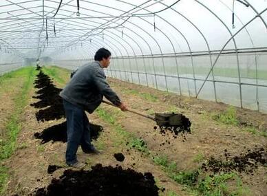有机肥用不对会烧根这么救才有效