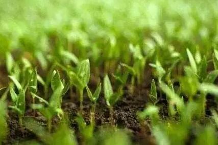果菜茶有机肥替代化肥具体怎么做?