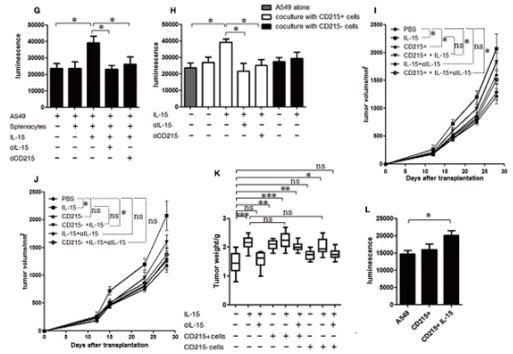白介素15(IL-15)对肺癌生长的促进作用