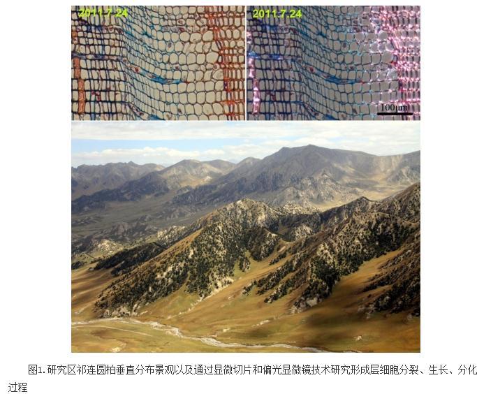 青藏高原东北部祁连圆柏形成层活动的温度和降水阈值研究