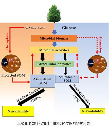草酸和葡萄糖添加对土壤N转化过程的影响差异