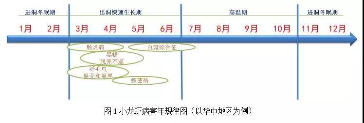 小龙虾养殖过程中的常见病害、防治方法(总结)