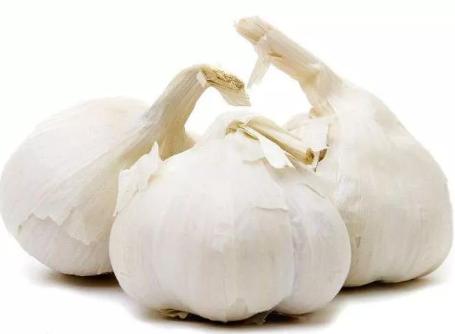 大蒜也能应用在水产养殖中?